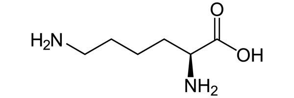 Lysin